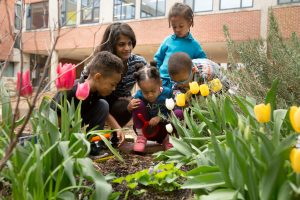Preschool students look for signs of spring in a school garden. <br /> <strong>Photo by Allison Shelley/The Verbatim Agency for American Education: Images of Teachers and Students in Action</strong>